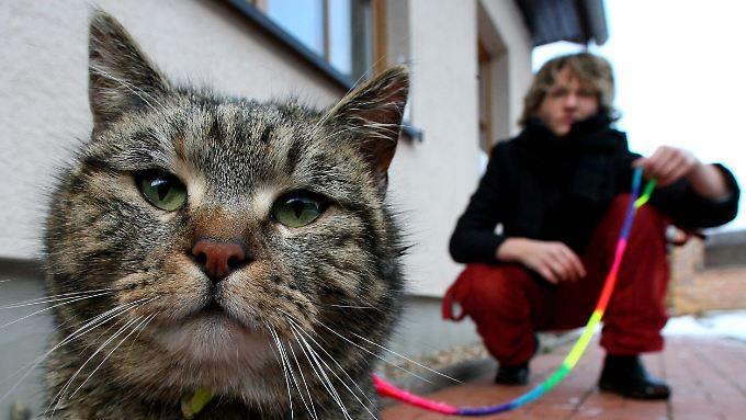 Über den Kot von Katzen wird Toxoplasmose auf den Menschen übertragen.