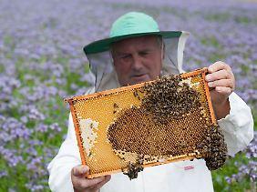 Ein Imker mit einer Honigwabe vor einem Feld mit Phacelia.