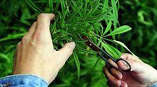 Joints erlaubt: Neues Drogengesetz in Tschechien