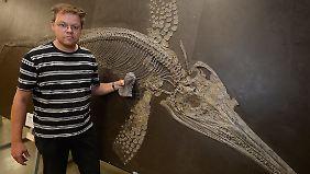 Der Saurierexperte hält zum Größenvergleich den Oberarmknochen einer neu entdeckten Art eines Fischsaurier (Ichthyosaurier) vor das Skelett eines kleineren Suevoleviathans.