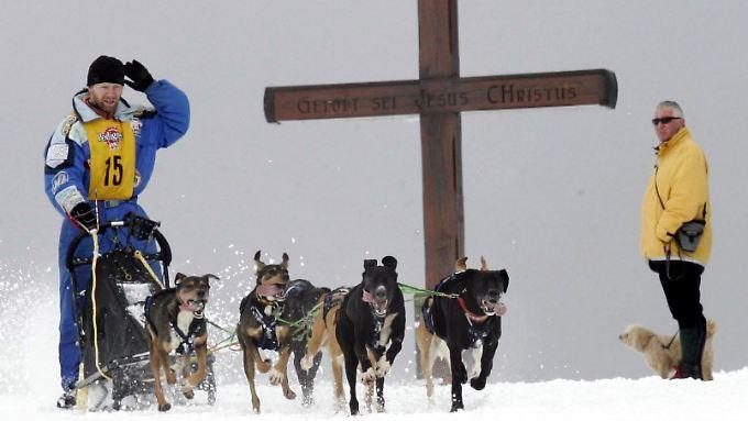 Die Veranstalter bitten die Besucher, keine eigenen Hunde mitzubringen.