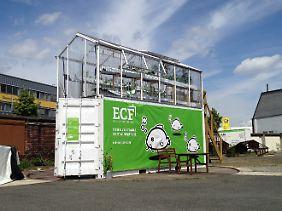 Der ECF-Prototyp: Aquaponik auf Container-Basis.