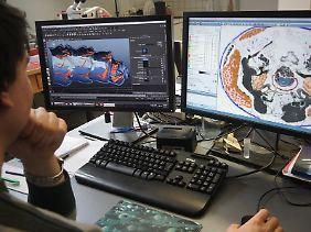 Die Forscher nutzen auch Animationsprogramme, um 3-D-Bilder der Insekten zu erstellen.