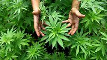 Cannabis als Medizin: Gericht erlaubt Selbstanbau