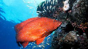 Street View unter Wasser: Google taucht zum Great Barrier Reef