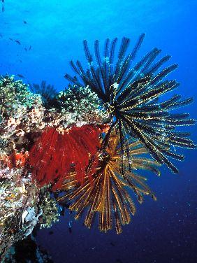 Stark bedroht: farbenprächtiger Korallenbewuchs am Great Barrier Reef.