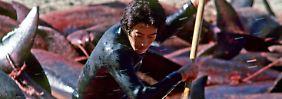 Geschäft mit dem Großen Tümmler: Japan schlachtet Delfine neben Delfinpark