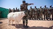 Vierbeiner im Krieg: Wenn Tiere zwischen die Fronten geraten