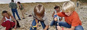 Mit Hammer und Meißel: Fossiliensuche im Altmühltal