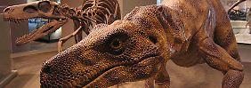 Bilderserie: Welt der Superlative: Dinosaurier