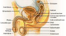 Behandlung von Prostatakrebs: Protein stimuliert Immunsystem