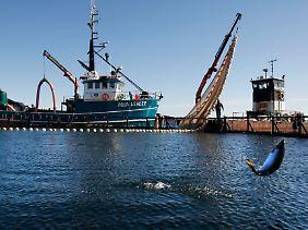 Die Motoren von Versorgungseinrichtungen sind so laut, dass sie Meeresbewohner vertreiben.