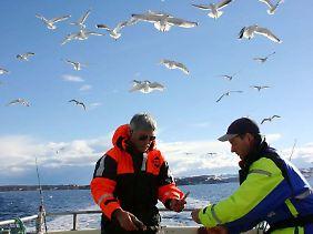 Die Möwen als ständige Begleiter: In Norwegen können Angelurlauber auch zu organisierten Kutterfahrten aufbrechen.