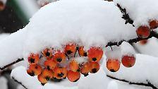 Für das Wochenende rechnen Meteorologen mit einem heftigen Wintereinbruch.