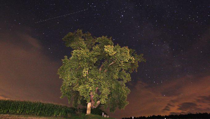 Ein Baum vor dem mit Sternen übersäten Nachthimmel.