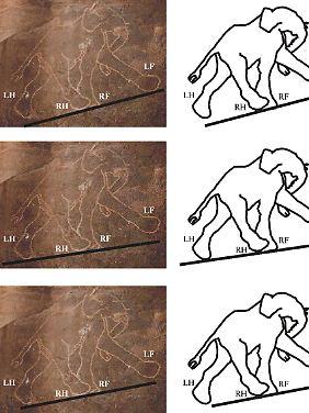 Prähistorische Zeichnungen und die Übertragung der Konturen zeigen drei Bewegungsvarianten.