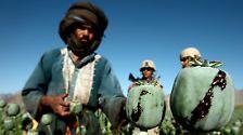 Wenn der Schlafmohn blüht: Der Tod kommt aus Afghanistan