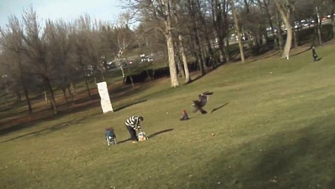 Gleich greift der Adler zu: Szene aus dem Streifen der vier kanadischen Trickser.