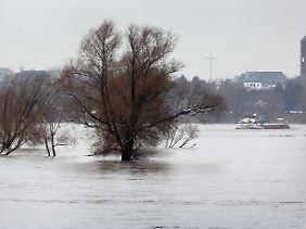 Der Rhein schwillt bereits an.