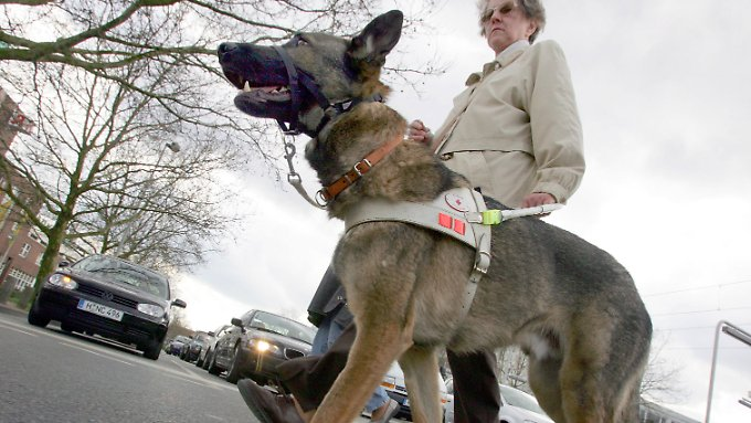 Blindenführhunde werden in speziellen Schulen ausgebildet. Die Kosten: gut 30.000 Euro.