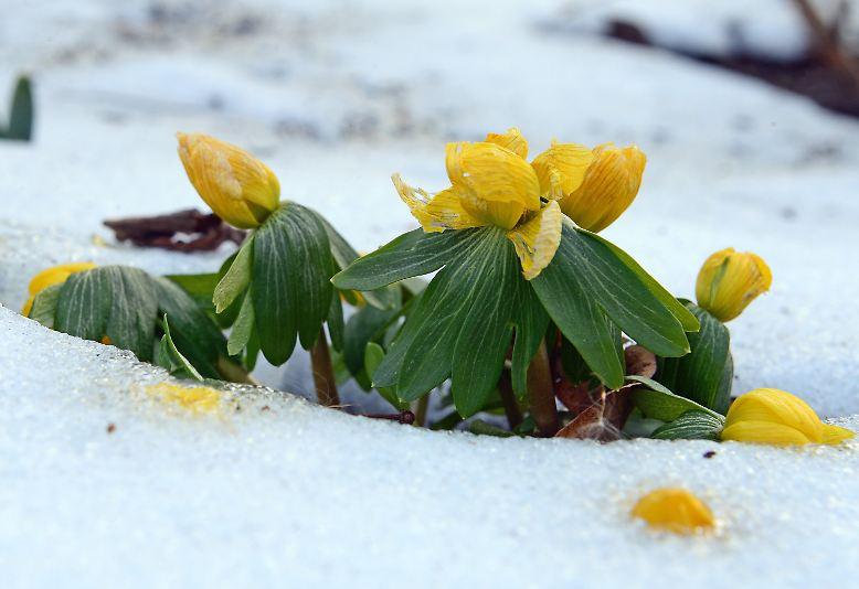 Während in unseren Breiten der Winter einfach nicht enden will, ...
