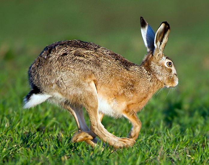 Ostern ist da, die Fastenzeit geht zu Ende. Doch vor das Eiersuchen hat der Herrgott den Höhepunkt des Fastens gesetzt - die Karwoche.