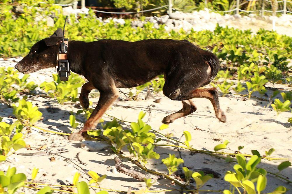 bulldozer gift wildhunde viren so k mpft australien gegen tierische plagen n. Black Bedroom Furniture Sets. Home Design Ideas