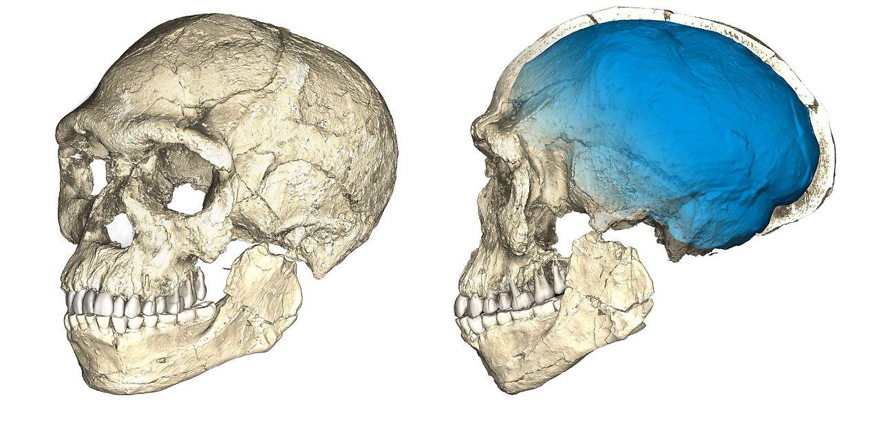 300.000 Jahre alte Knochen: Homo sapiens ist viel älter als gedacht ...