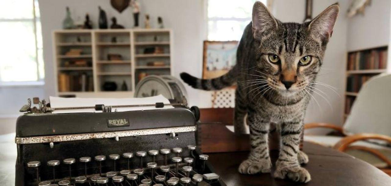 Hemingway Katzen