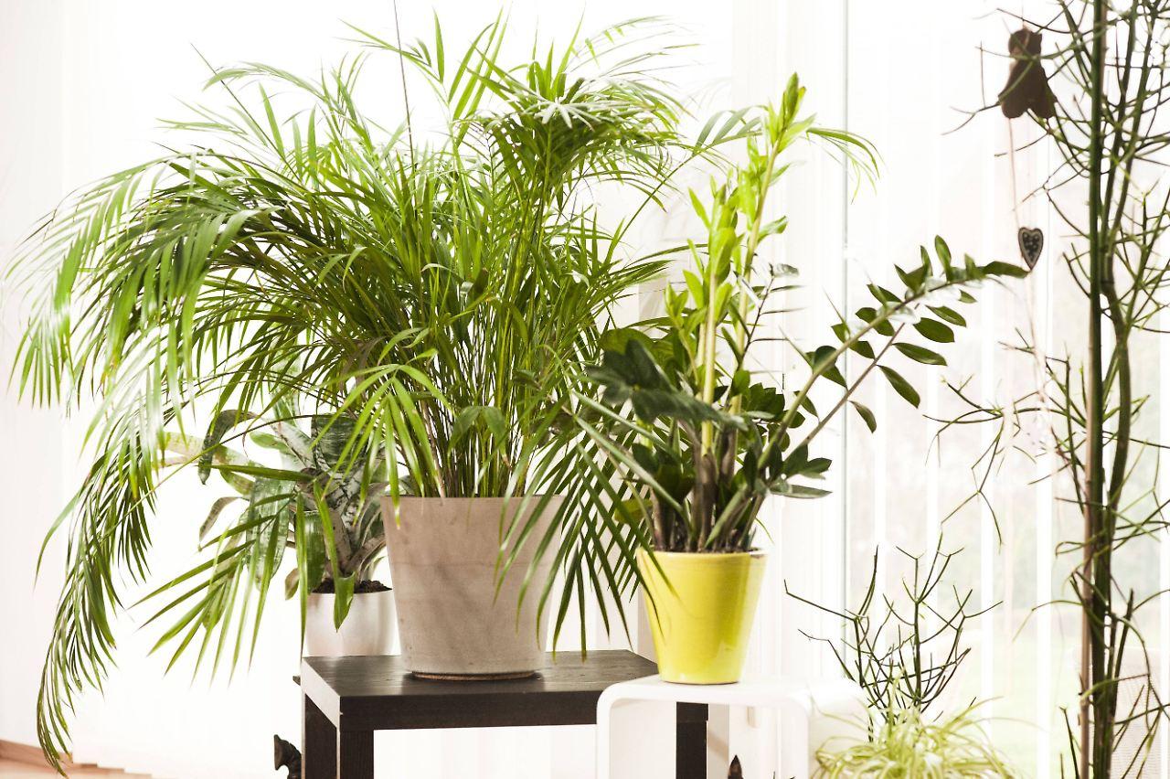 frage antwort nr 519 sind pflanzen im schlafzimmer. Black Bedroom Furniture Sets. Home Design Ideas