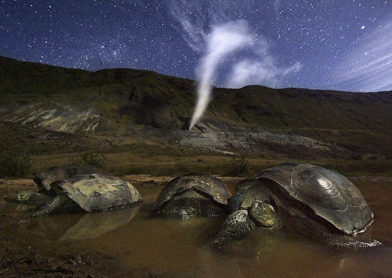 ... Galapagosinseln und den Sternenhimmel darüber. (hul)