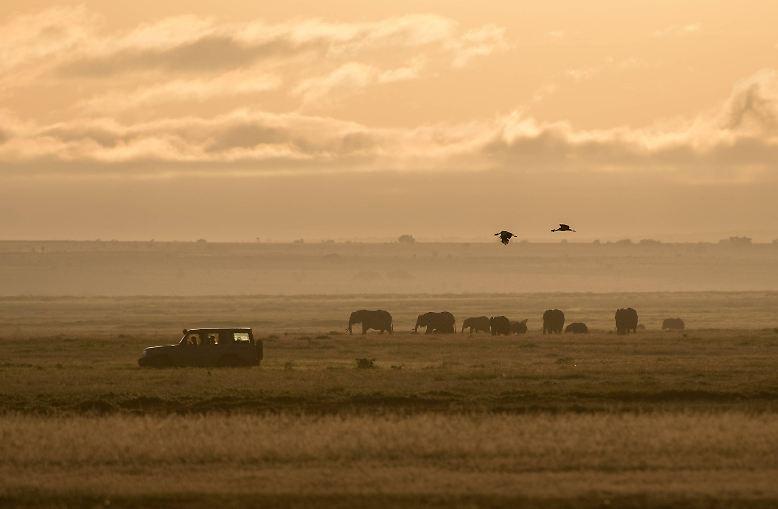 Die sanften Dickhäuter bewegen sich in Herden übers Land.