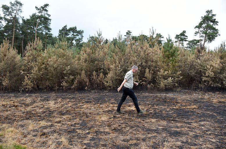 Kersten Blaschczok hat derzeit einen der wichtigsten Jobs in Deutschland: Der Teamleiter des Regionalverbands Ruhr (RVR) untersucht und dokumentiert die Folgen von Waldbränden - hier einen kleinen im nordrhein-westfälischen Haard.