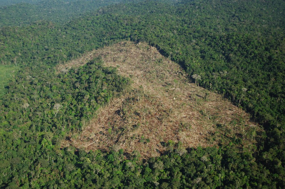 speech on deforestation and its effects What is deforestation the destruction of natural forests because of cutting trees, logging, making space for cattle grazing, mining, extraction of oil, building dams and population expansion is known as deforestation.