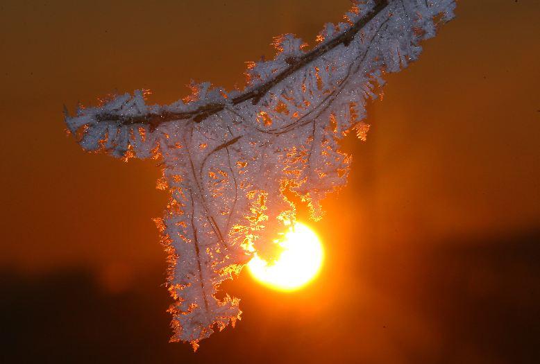 Schneekristalle faszinieren.