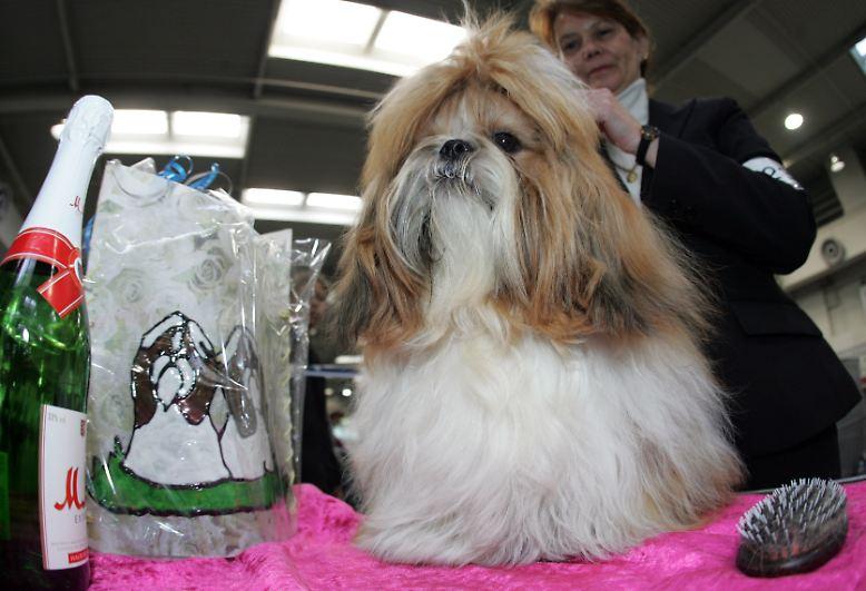 Hundeliebhaber und Menschen, die großen Ekel entwickeln können, sollten diese Bilderserie lieber meiden.