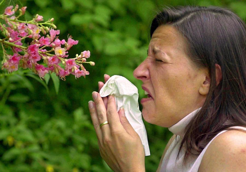 pollen voraus die besten heuschnupfenmittel n. Black Bedroom Furniture Sets. Home Design Ideas