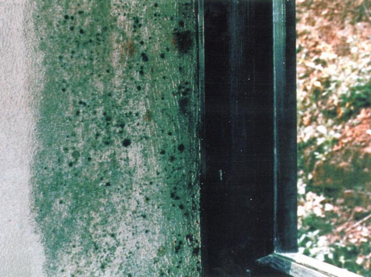 Lüften hilft nicht immer: Warum schimmelt die Wohnung? - n-tv.de